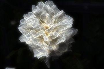 Rose 3 van Edgar Schermaul