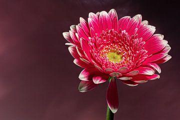Blumen Traum 1 von Marcel Kieffer