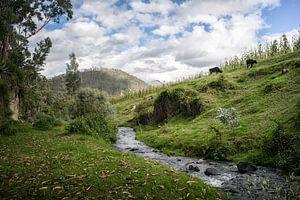 Landschap met beekje in Ecuador van