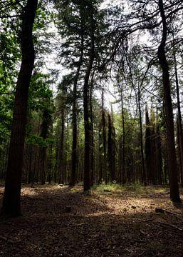 Zonnig veldje in een donker bos van Maja Artwork
