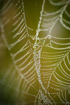 spinrag met druppeltjes van
