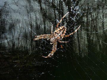 Le Masque de l'araignée sur Christine Nöhmeier