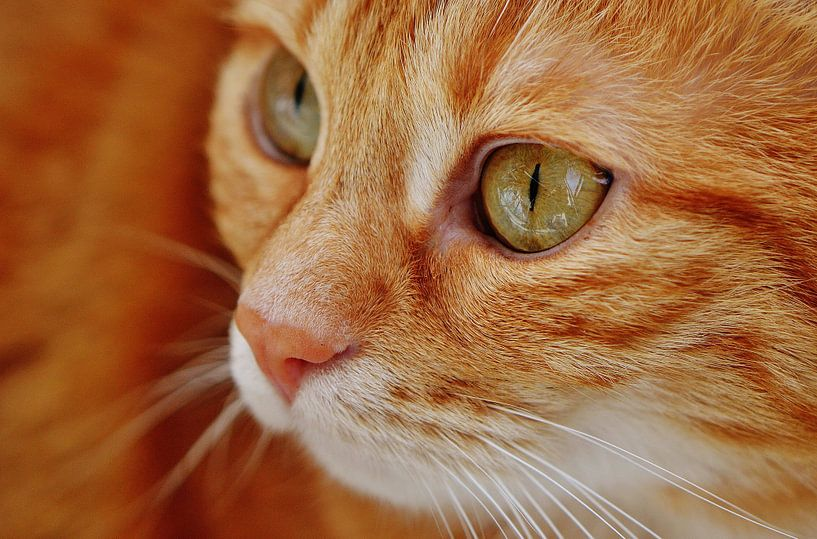 Nahaufnahme der Tasse rote Katze oder Kater von Atelier Liesjes