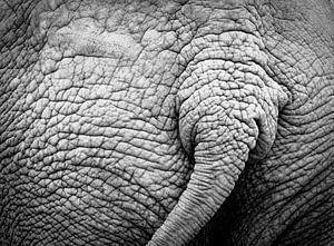 Elephants tail von lieve velle