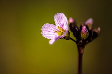 Het is weer lente van Mike Bot PhotographS