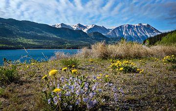 Blumen an der Küste im Grenzgebiet zwischen Kanada und Alaska von Rietje Bulthuis