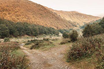 Grüne Weiden in den Bergen von Prevalla in Prizren, Kosovo von Besa Art