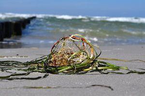 Strandgut auf Hiddensee