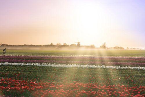 Tulpen uit het Noorden, Garsthuizen