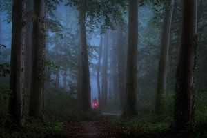 Fietsen in het donkere bos van