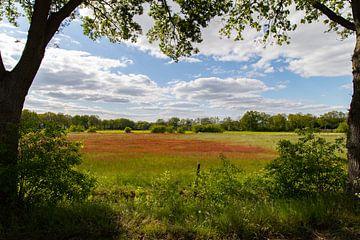 Typische Twenter Landschaft von Remco Ditmar