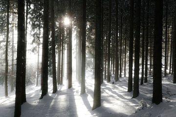 Bos tegen het licht van Jürgen Wiesler