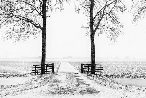 Winters beeld in de Alblasserwaard