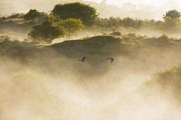 Magisch vliegbeeld van 2 ganzen van Remco Van Daalen