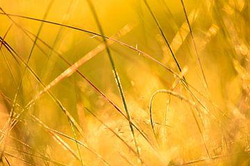 Zonsondergang door het gras in de Achterhoek von Arno Wolsink