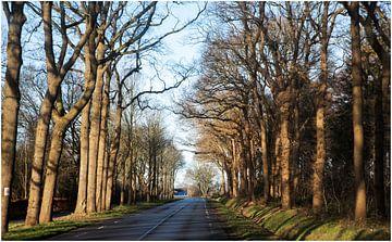 Langweg in Drenthe van Anuska Klaverdijk