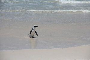 Pinguin dockt an