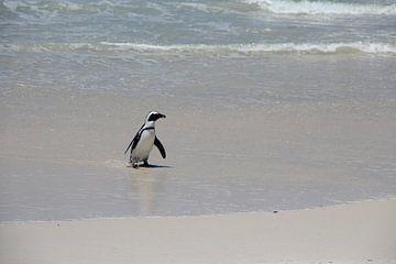 Pinguin meert aan van Quinta Dijk