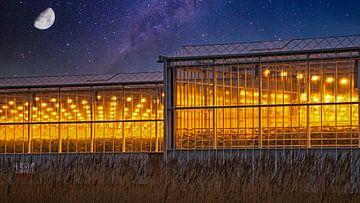 Ein Westland-Gewächshaus mit wachsendem Licht vor einem Sternenhimmel mit Mond von Gert van Santen