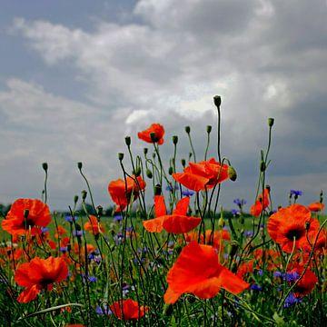Poppy von Ostsee Bilder