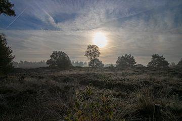 Morgengrauen von Ton Tolboom