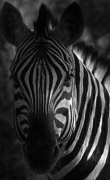 Code à barres africain sur Joris Pannemans - Loris Photography