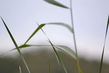 Herbstliche Elemente Naturfoto. von Foto GERfie