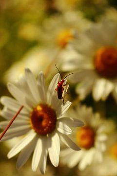 Beestje op een margriet van