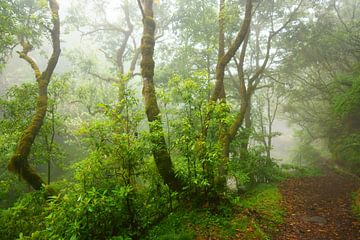 Mistig bos sur Michel van Kooten