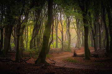 Forêt avec route sur Remko Ongersma