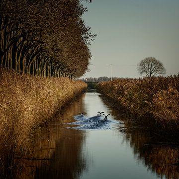 Herbstliche Stimmung in Flevoland von Rene  den Engelsman