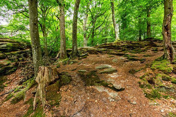 Mullerthal Trail VI