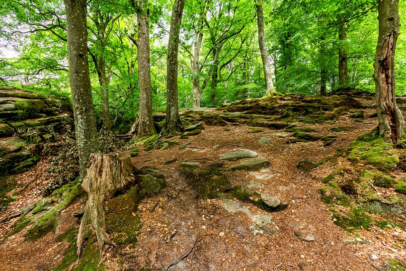 Mullerthal Trail VI van Marcel Moonen @ MMC Artworks