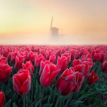 Ochtend mist met molen en rode tulpen van Nick de Jonge - Skeyes