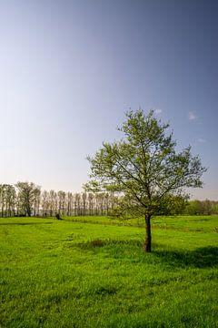 Baum auf einem Feld bei Sonnenuntergang von Mickéle Godderis