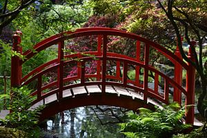 Rode brug in Japanse Tuin Clingendael  van