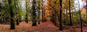 herfstbos (panorama) van jan van de ven