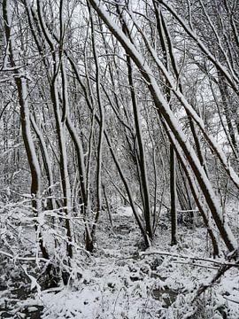 Bomen in de sneeuw von Elize Aurik