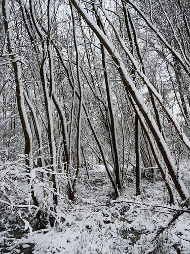 Bomen in de sneeuw van Elize Aurik
