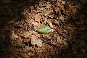 Last leaf standing sur Kristian Oosterveen
