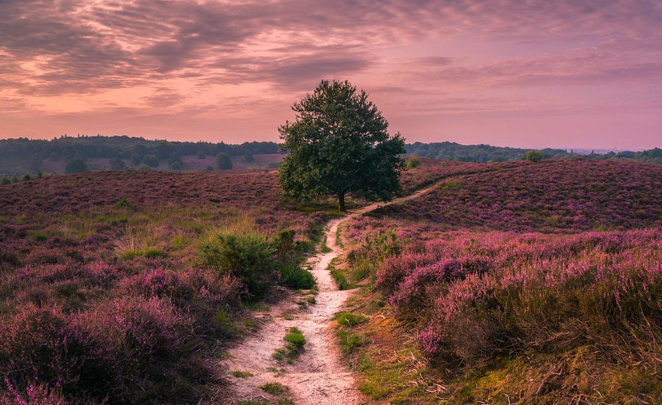 Volg het pad  door de roze wildernis van Joris Pannemans - Loris Photography