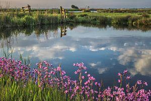 Waterlandse lente. Sloten, weiland en bloemen