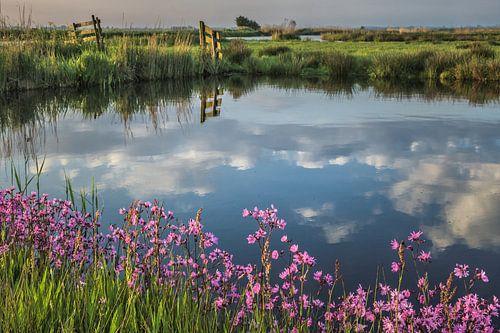 Waterlandse lente. Sloten, weiland en bloemen van