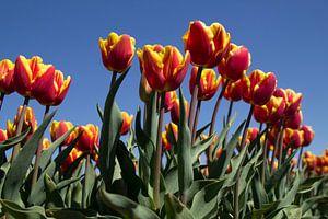 Tulpen von Ingrid Mooij