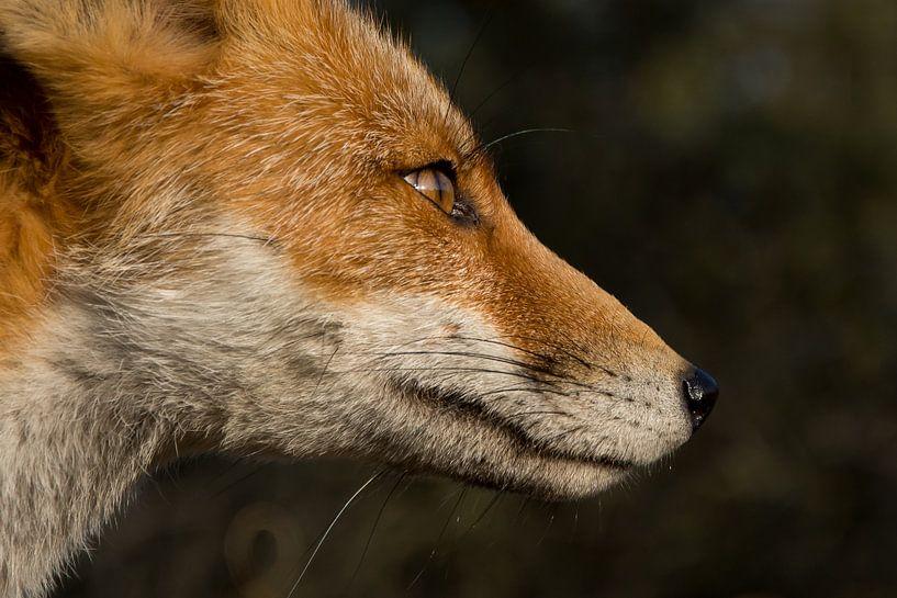 Zijaanzicht vos von Yvonne van der Meij