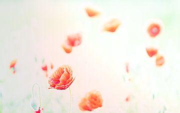 Romantisches Feld mit Mohnblumen von natascha verbij