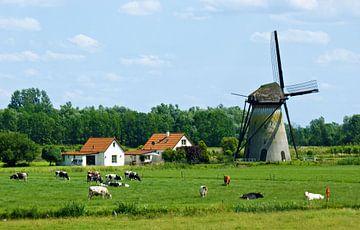 Hollands tafereeltje bij Lienden van Jessica Berendsen