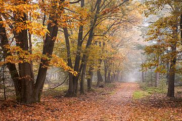 Herfstkleuren in mistig bos op de Veluwe van Cor de Hamer