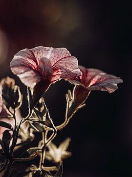Blume von José Lugtenberg
