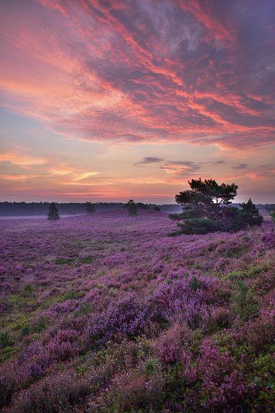 zonsopkomst heide van Wim Westmaas